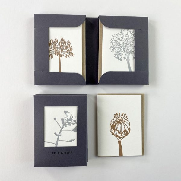 Seedheads Boxed set